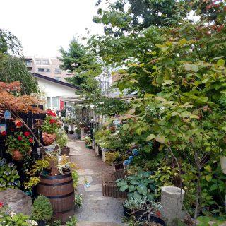 【北海道】シンボルツリーにおすすめな木【札幌市】